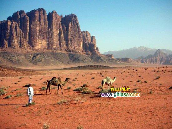 بحث-عن-سيناء
