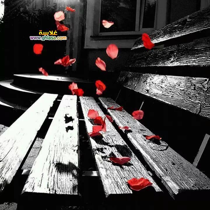 شبكة غلاسة 2 - صور رومانسية روعة happy valentine day