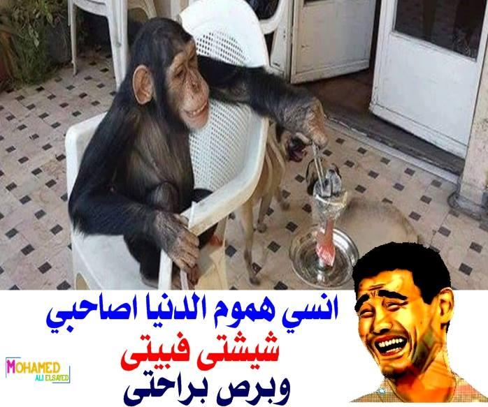 صور نكت مصرية جديدة