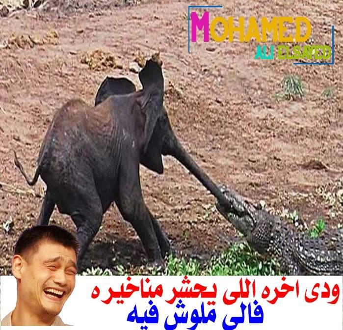 نكت مصرية مضحكة 2018